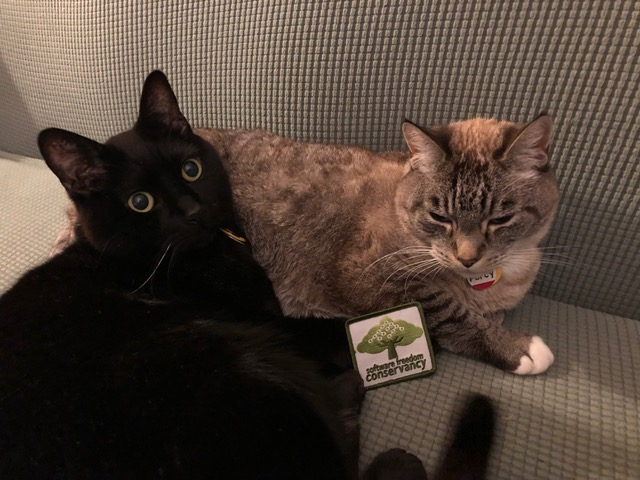 Two cats cuddling with a Conservancy branded patch.